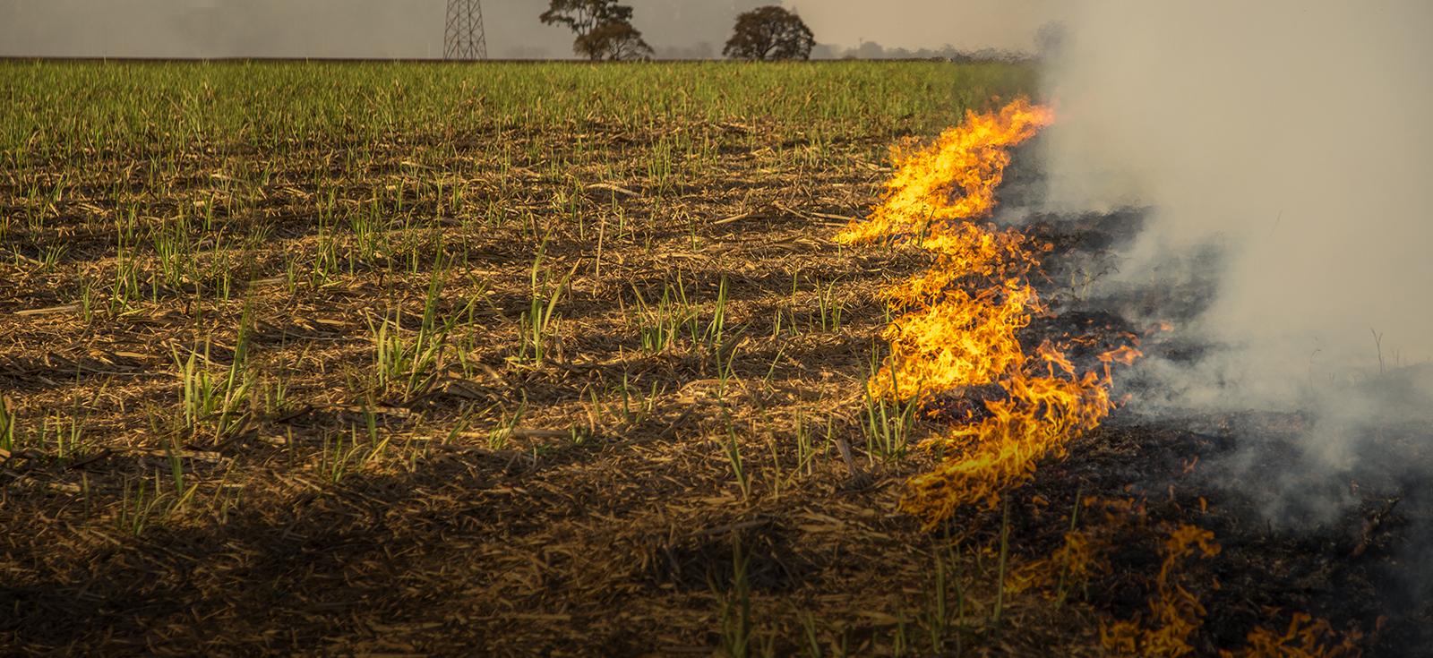 Fire incidences database for Punjab (2012 - 2018)